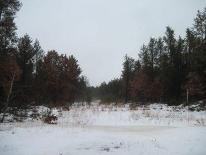 L6287 - Adams County 11+ Acres Lot 1
