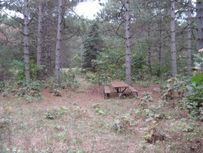 L6328 - Goose Lake 4.22 Wooded Acres
